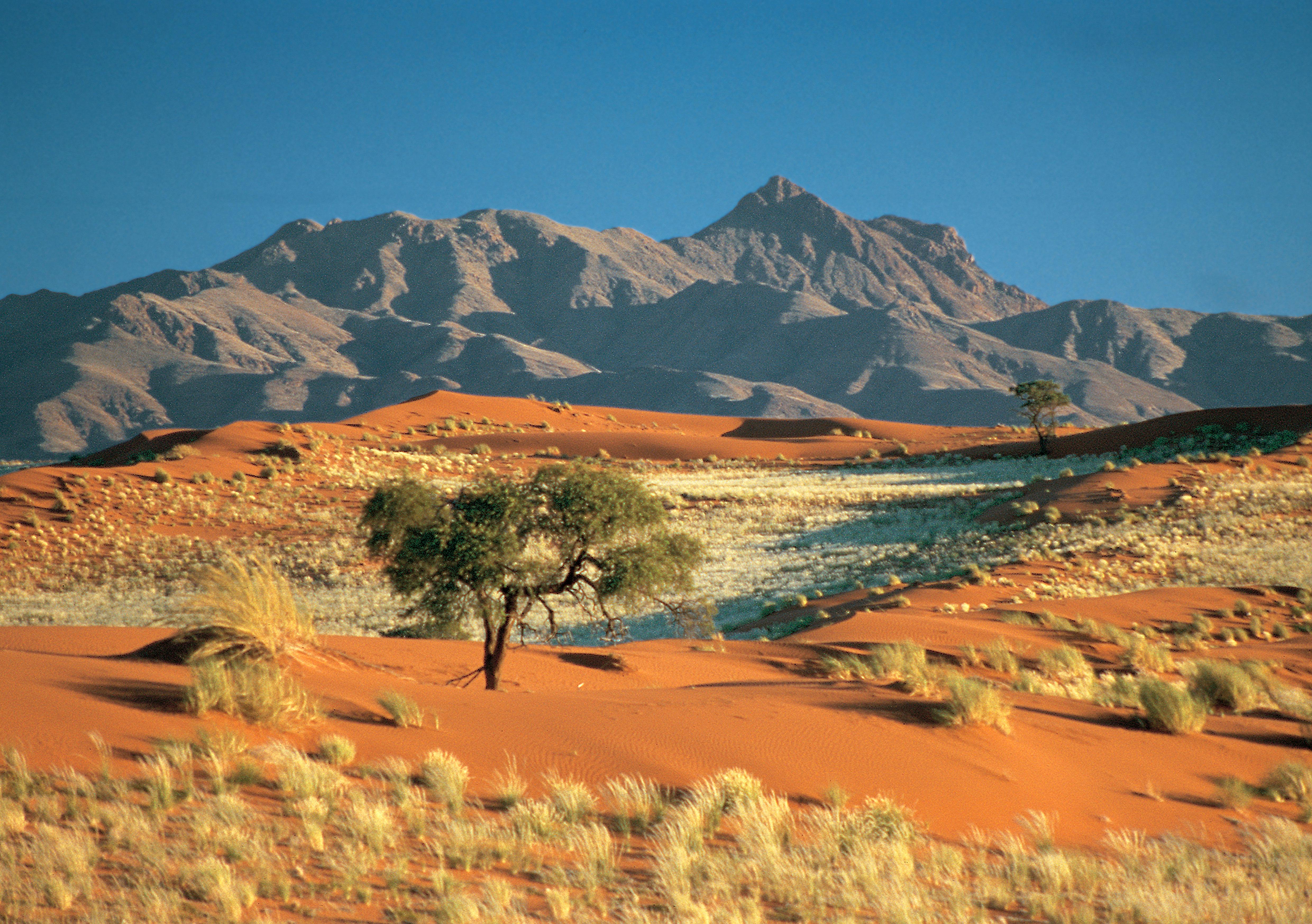 maps  kottke org  Desert Daisy Jewelry   Blog